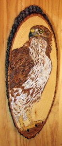 Melissa'a Hawk